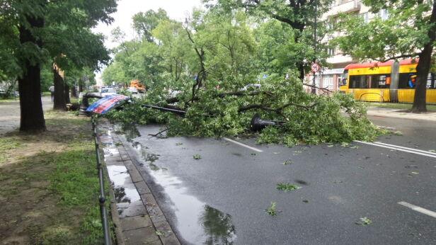 Drzewo na ulicy Mickiewicza Mateusz Szmelter/ tvnwarszawa.pl