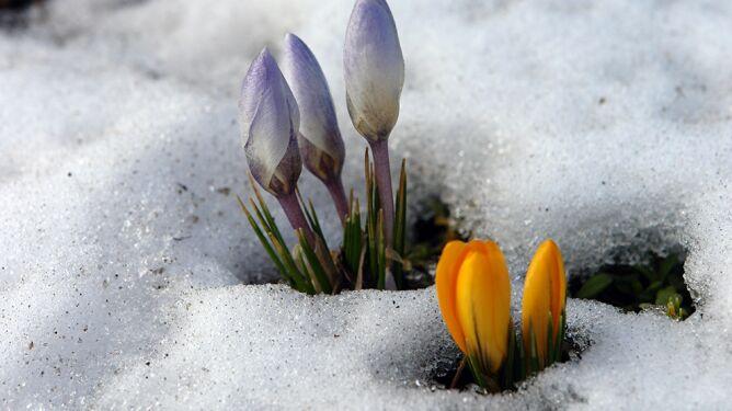 Deszcz, wiatr, ocieplenie, ale i ryzyko powrotu opadów śniegu