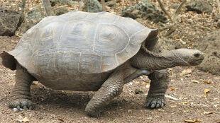 Ktoś ukradł żółwie z Galapagos. Sprawców nie ujęto