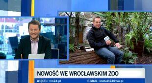 Latająca wiewiórka we wrocławskim zoo (TVN24)